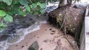 Mangrove, low tide.